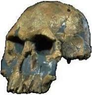 skull1470